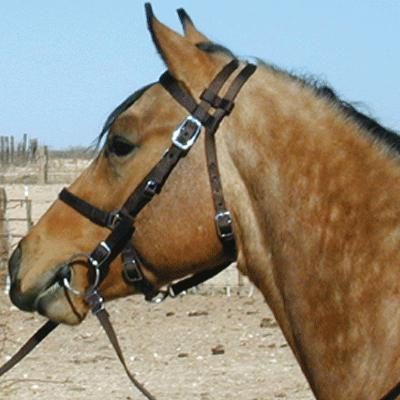Combination Halter and Bridle with Reins