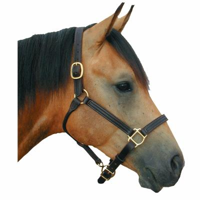 Deluxe leather track halter 1""