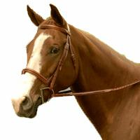 Exselle® Elite Fancy Raised Padded Bridle