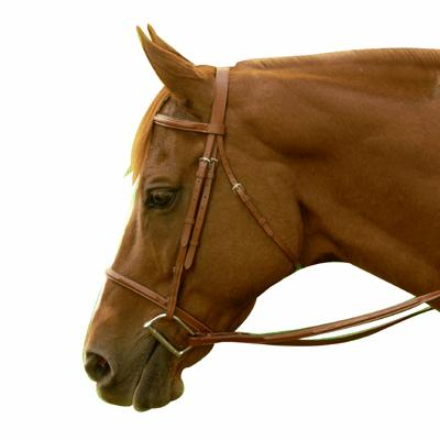 Exselle® Elite Fancy Square Raised Bridle