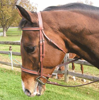 Exselle® Lined Bridle
