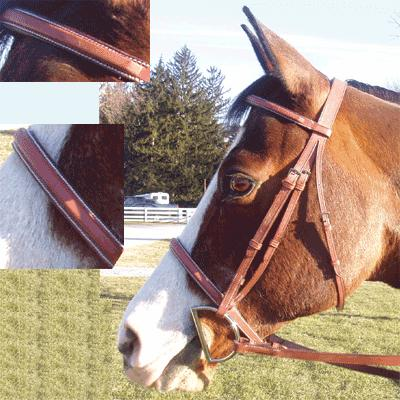 Exselle® Square Raised Bridle