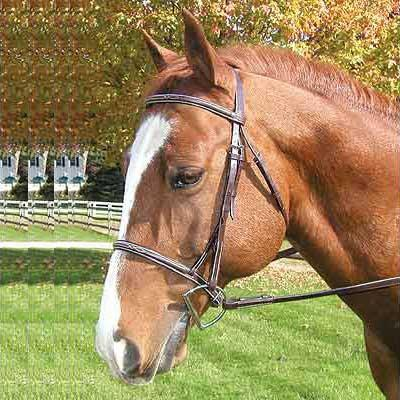 Legacy Premium Fancy Raised Bridle