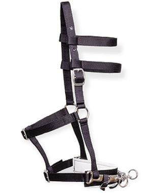 Lunging Halter