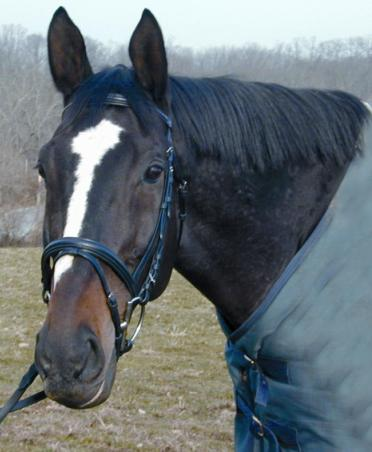 Shannon® Padded Snaffle Bridle w/Flash