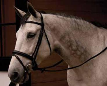 Thinline® Comfort Padded Bridle